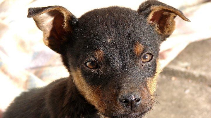 Jak należy postąpić, gdy znajdziemy bezdomne lub porzucone zwierzę